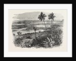 View in the Bermudas, Bermuda by Anonymous