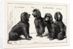 The Kennel Club Show at the Agricultural Hall: A Successful Family of Irish Water-Spaniels, UK by Anonymous