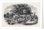 Removal of a Tree by Barron's Machine, in the Royal Botanic Society's Garden, Regent's Park by Anonymous