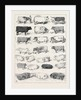 The Cattle Show at Islington, Some of the Prize Winners by Anonymous