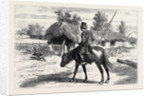 The War in the East, with the Cossacks: An Advance Guard in a Romanian Village: is Any One at Home? by Anonymous
