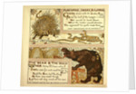 Porcupine Snake and Company the Bear and the Bees by Anonymous