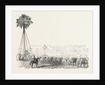 Removal of a Gigantic Palm-Tree from Messrs. Loddiges' at Hackney to the Crystal Palace 1854 London UK by Anonymous