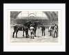 The Shire Horse Show at the Agricultural Hall: The Final Duel by Anonymous