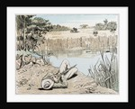 Hunting a Hippopotamus in South Africa by Anonymous