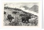 An Elephant Kraal Arranged for the Czarevitch Near Colombo Ceylon (Sri Lanka) by Anonymous