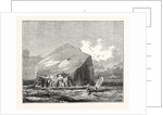 View of the Bass Rock which Lies at the Mouth of the Frith of Forth at the Distance of About a Mile and a Half from the Coast of East Lothian. by Anonymous