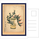 Akikusa no rikka, Potted autumn grasses and Rikka by Utamaro II