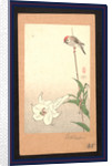 Yuri ni shokin, Small bird on lily plant by Baison