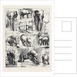 The Attempted Removal of Jumbo from the Zoological Gardens by Anonymous