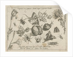 Insects, flowers and a snail around a walnut by Joris Hoefnagel