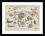 Insects, plants and shells around a chick in an egg by Joris Hoefnagel
