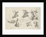 Study Sheet with heads of cows by Andries Leijerdorp