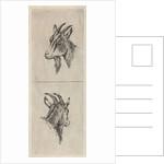 Bucks head by Pieter Janson