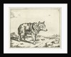 Standing wolf, and profil by Paulus Potter