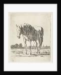 Single white horse by Jacobus Cornelis Gaal