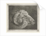 Head of a ram to the eye curved horn by Pieter Gaal