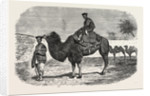 Camels of the North of China by Anonymous