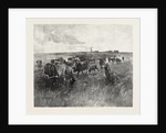 A Mennonite Girl Herding Cattle, Canada by Anonymous