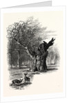 Giant Oak, Near Cranbourne Tower by Anonymous