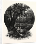 A Hummock, Florida by Anonymous
