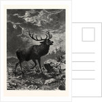 A Deer; after Specht by Anonymous