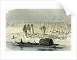 A Massacre of Turtles 1869 Peru by Anonymous