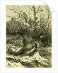 Birds Austria 1891 by Anonymous