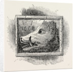 Old Sign of the boar's Head by Anonymous