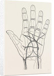 Surface markings on the palm of ffile hand by Anonymous