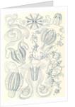Comb jellies. Ctenophorae by Ernst Haeckel