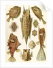 Boxfishes. Ostraciontes by Ernst Haeckel