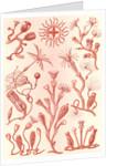Aquatic animals. Campanariae by Ernst Haeckel