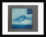 Reclining cat, United States, USA by Anonymous