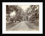 European and Indian people along an avenue in the Dutch East Indies by Anonymous