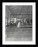 Java, Indonesia, gamelan orchestra at the Regent of Wonosobo, visite by Anonymous
