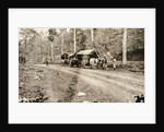 Java, road from Salaman to Borobudur with bullock carts, Indonesia by Anonymous