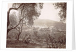 Grasse, view between the olive trees, c. 1890 - c. 1900 by GJ