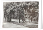 Garden or park in the Dutch East Indies, indonesia by Anonymous