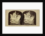 Beautiful in Death by The London Stereoscopic Company
