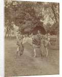 Buginese princess on horseback by Anonymous