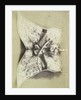 Embroidered Saddle Cloth. Turkey by Hugh Owen