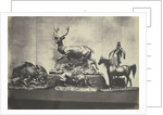 Castings of Animals by C.M. Ferrier & F. von Martens