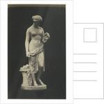 Glycera by C.M. Ferrier & F. von Martens