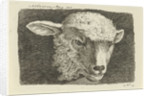 Head of a lamb by Anthony Oberman