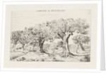 Landscape with Olive Trees in Montpellier France by Louis Charles Hora Siccama