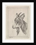 Goats head by Pieter Janson