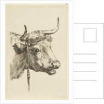Head of a cow by Jan Kobell III