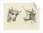 Two cows heads by Pieter Roosing