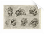 Study Sheet with seven heads in two rows by D. van den Bosch